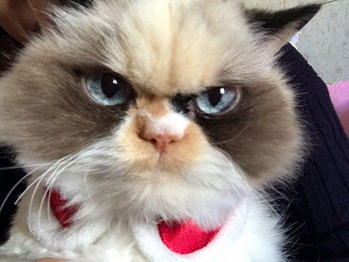 instagram.com/the_cat_named_meowmeow