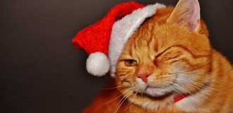 кот, новый год, похмелье