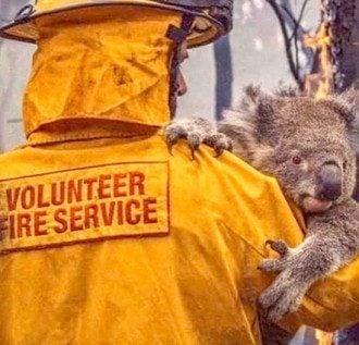 Пожары в Австралии убили полмиллиарда животных / instagram.com/sussexroyal