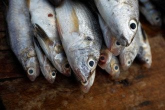 Диетолог предупредила, что в тунце может содержаться ртуть - Самая полезная рыба