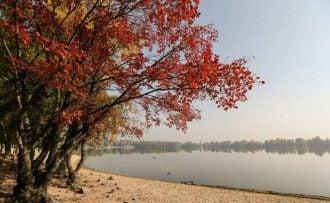 Експерт спрогнозувала, що в Україні в середу буде ідеальне бабине літо – Погода на завтра