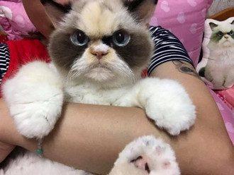 Кошка Мяу-Мяу