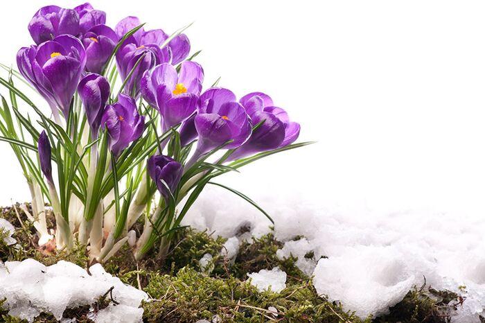 Погода в апреле 2020 обещает снег в Украине - Прогноз погоды синоптик