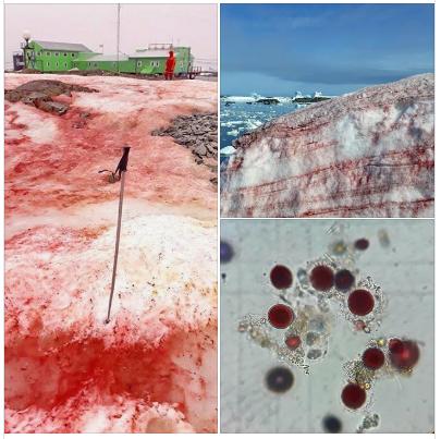 Похож на кровь: в Антарктиде запаниковали из-за окраски снега