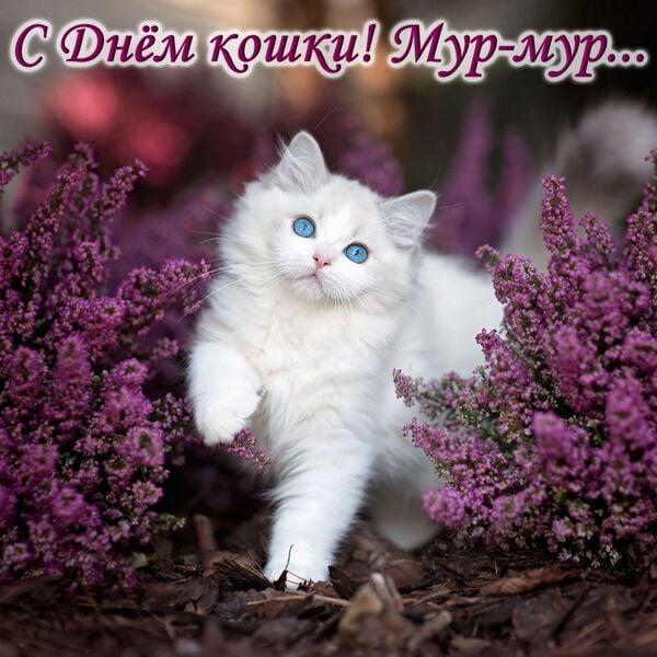 открытки с днем кошек бесплатно