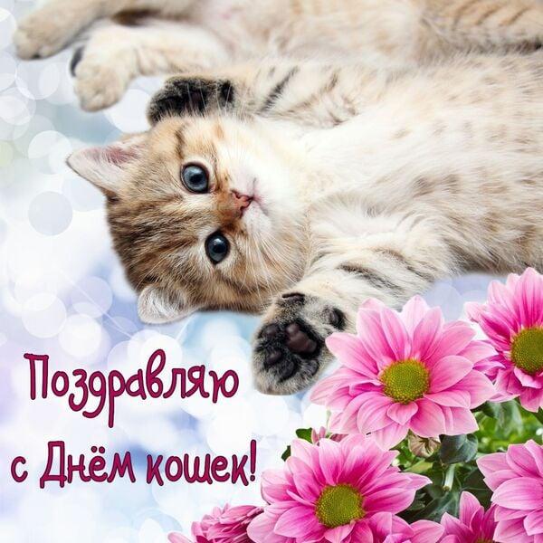 фото всемирный день кошек