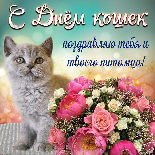 1 марта день кошек открытки
