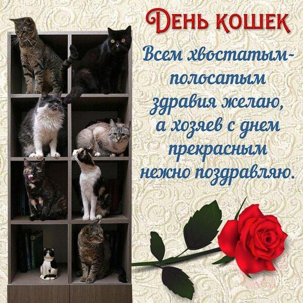 прикольные картинки с днем кошек