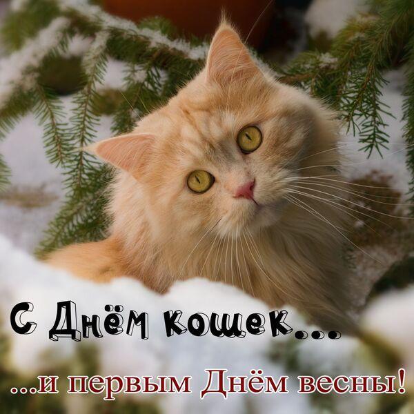 красивые картинки с днем кошек и первым днем весны