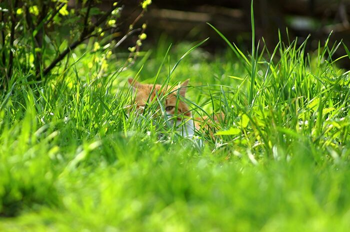 весна_трава_лето_коты_кошка