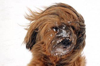снег, ветер, погода, собака