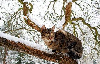 кот_кошка_снег_зіма