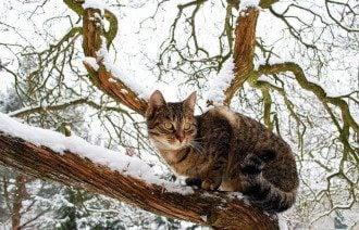 22 февраля – праздник кошек и Мясопустная родительская суббота – что нельзя делать