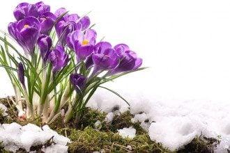 Погода в квітні 2020 обіцяє сніг в Україні - Прогноз погоди синоптик