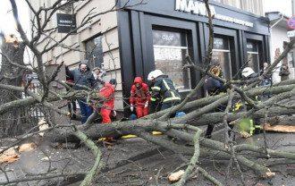 непогода, упало дерево