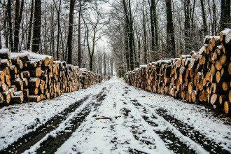 вирубка лісу, ліс
