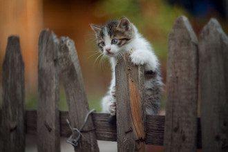День кошек 1 марта – прикольные картинки, гифки и поздравления с Днём кошек
