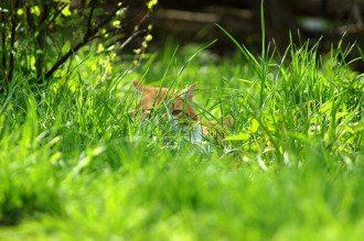 1 березня – свято весни, Прощену неділю 2020 і День котів – привітання, що не можна робити
