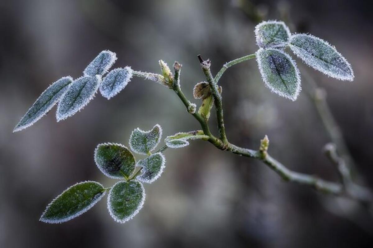 Погода на март 2020 – синоптик назвал точные даты морозов в Украине и Киеве