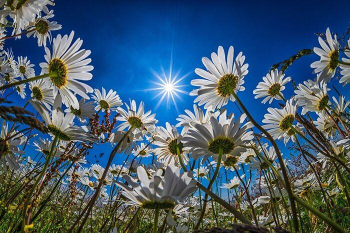 День весеннего равноденствия и с Днем счастья 2020 – 20 марта праздник