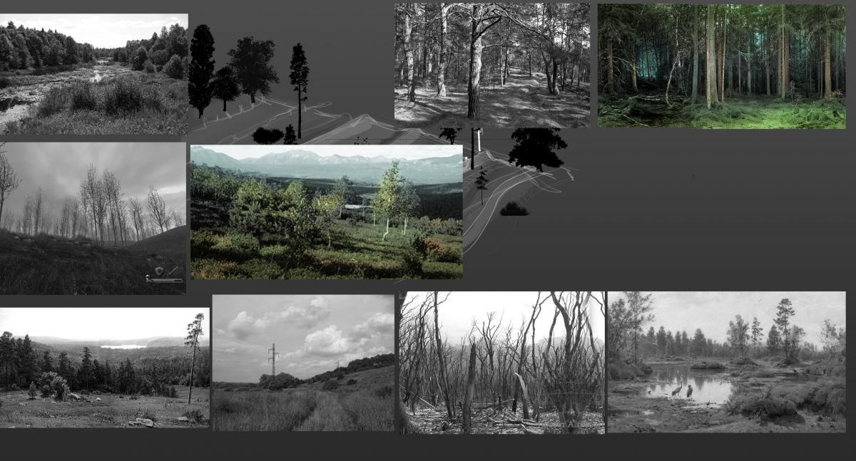 Фото и модель леса