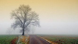 Синоптик - де в Україні сьогодні буде сніг, а де - туман