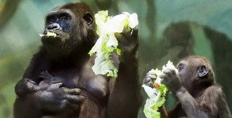 Українці як горили в зоопарку не знають свого діагнозу / mos.ru