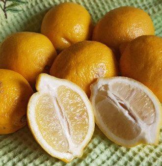 В Украине подорожали лимоны / Instagram