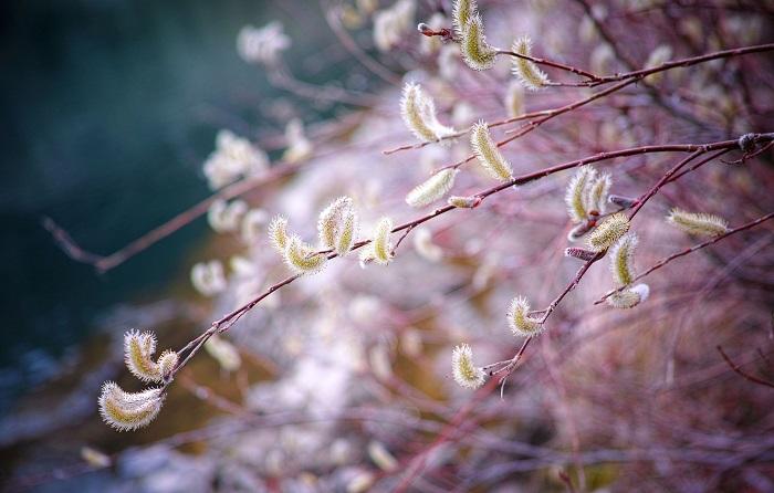 11 квітня свято Лазарева субота – що можна робити, привітання