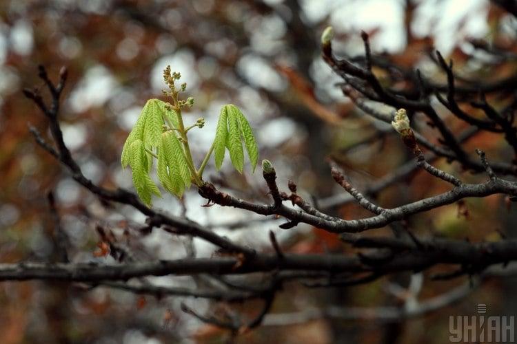 Україні загрожують сильні заморозки – Прогноз погоди