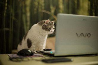 компьютер_веб-мастер_интернет_кот_кошка