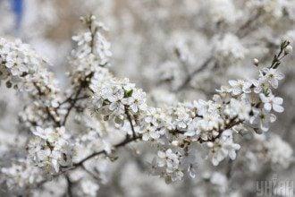 В Укргідрометцентрі попередили, що у Київ повернуться заморозки – Погода в Києві на п'ять днів
