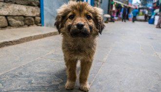 собака цуценя