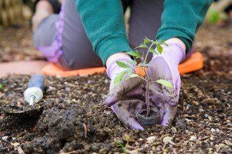 Місячний посівний календар на травень 2020 - коли садити картоплю і квіти