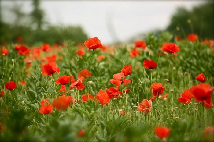 8 мая праздник - День памяти и примирения 2020 - что делать, приметы