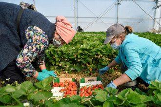 Работа в Польше - карантин из-за коронавируса ослабили ради украинцев