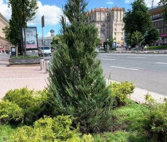 На Крещатике провели новое озеленение / @zelenbud