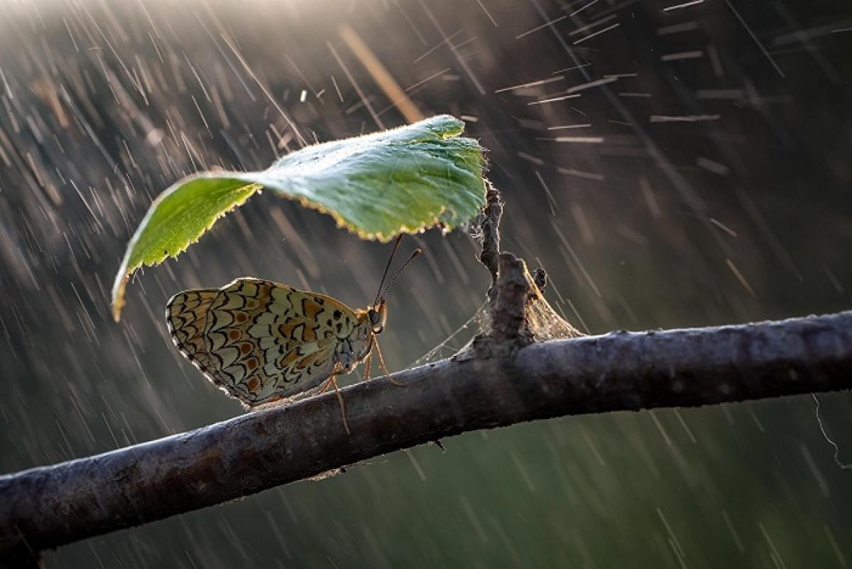 погода_прогноз погоды_дождь_синоптик_бабочка_природа