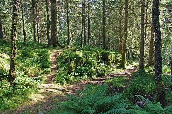 природа_лето_лес_деревья