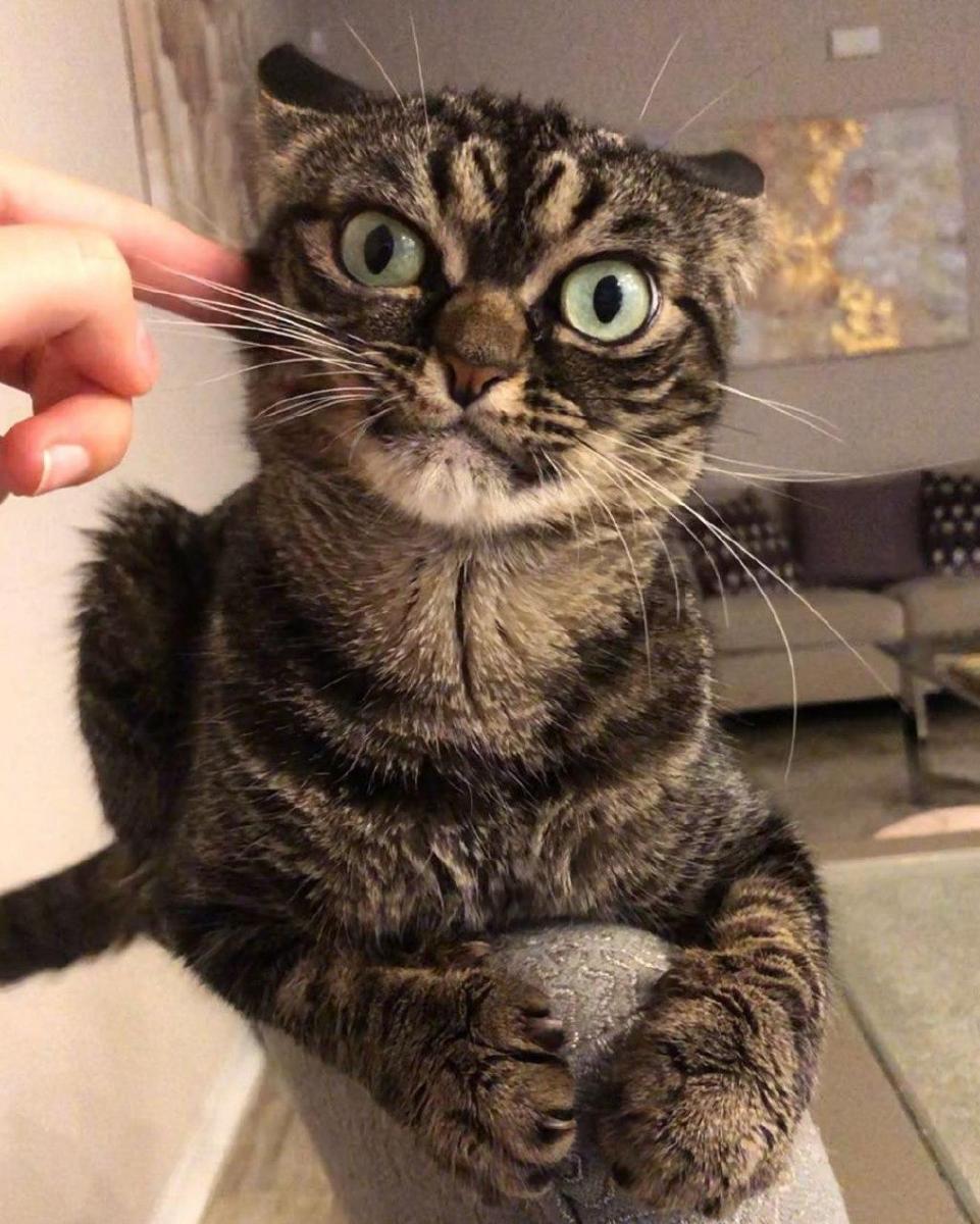 Сердита кішка Angry Kitzia