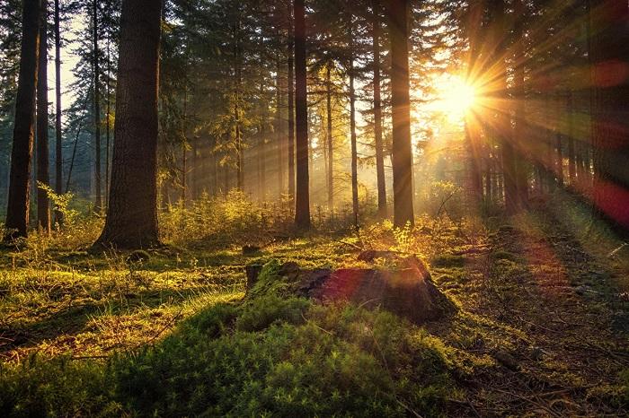 1 липня - свято Ярилин день - що не можна робити, прикмети