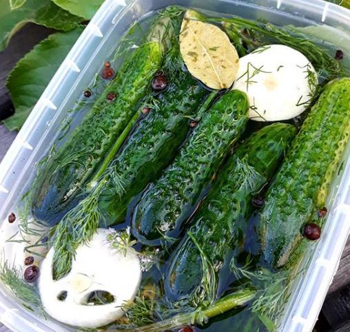 У контейнері огірочки можуть стати малосольними через 12 годин – Малосольні огірки рецепт хрумкі