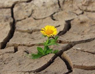 цветок, засуха, жара