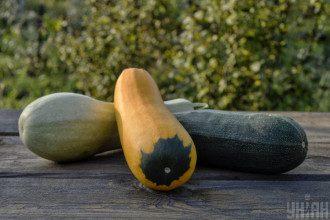 Кабачки можна готувати з сиром дорблю – Смажені кабачки