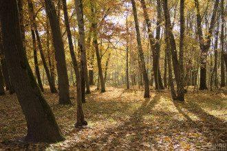 Метеоролог повідомила, що в Україні восени посилюватиметься пожежна небезпека – Погода осінь 2020 Україна