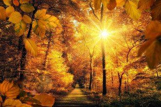 осень_природа_солнце_осеннее рівнодення