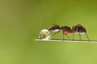 Как избавиться от муравьев в доме раз и навсегда - все способы