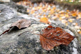 погода, осінь