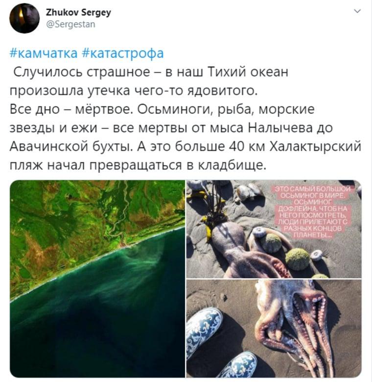 Экологическая катастрофа на Камчатке: СМИ назвали причину происшествия