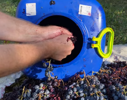 Дома вкусное вино можно сделать за считанные дни